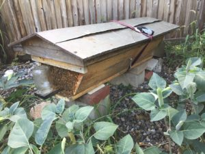 The Kenyan top bar hive is a trough-shaped hive that originated in Kenya under the direction of Canadian bee researcher Dr.Maurice V. Smith, sponsored by the Canadian International Development Agency under an initial four year project begun in 1971.